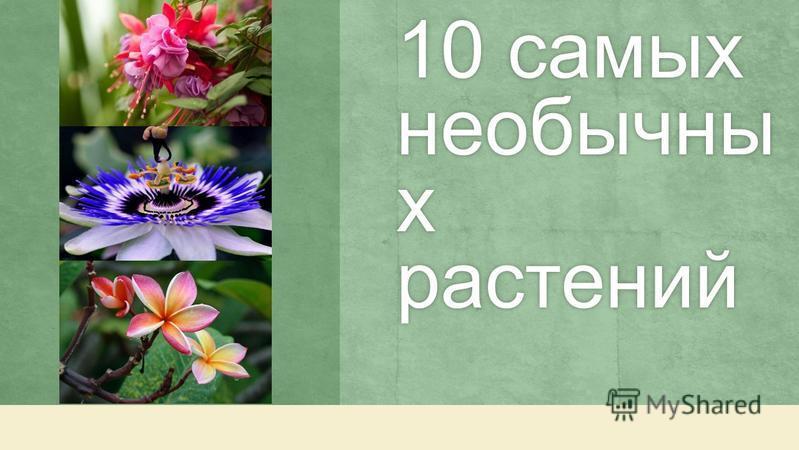 10 самых необычны х растений