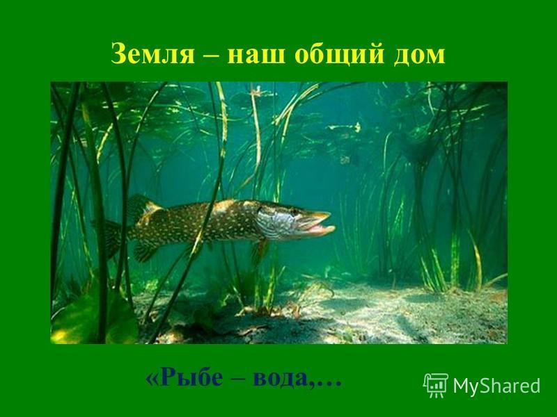 Земля – наш общий дом «Рыбе – вода,…