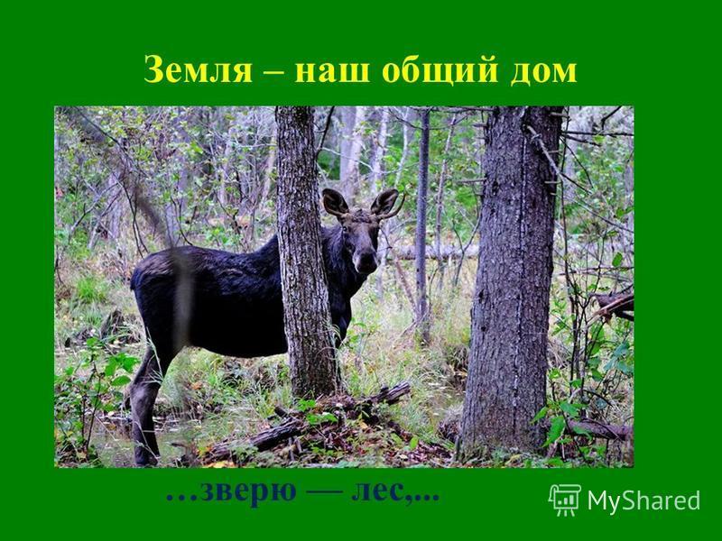 Земля – наш общий дом …зверю лес,...