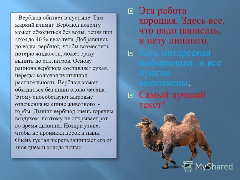 Верблюд обитает в пустыне. Там жаркий климат. Верблюд подолгу может обходиться без воды, теряя при этом до 40 % веса тела. Добравшись до воды, верблюд, чтобы возместить потерю жидкости, может сразу выпить до ста литров. Основу рациона верблюда состав