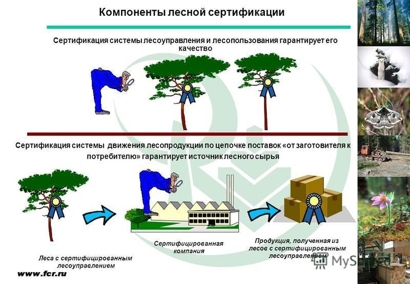 Сертификация системы лесоуправления и лесопользования гарантирует его качество Сертификация системы движения лесопродукции по цепочке поставок «от заготовителя к потребителю» гарантирует источник лесного сырья Леса с сертифицированным лесоуправлением
