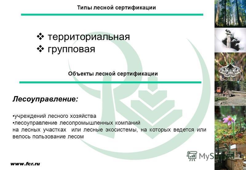 Лесоуправление: учреждений лесного хозяйства лесоуправление лесопромышленных компаний на лесных участках или лесные экосистемы, на которых ведется или велось пользование лесом Объекты лесной сертификации Типы лесной сертификации территориальная групп
