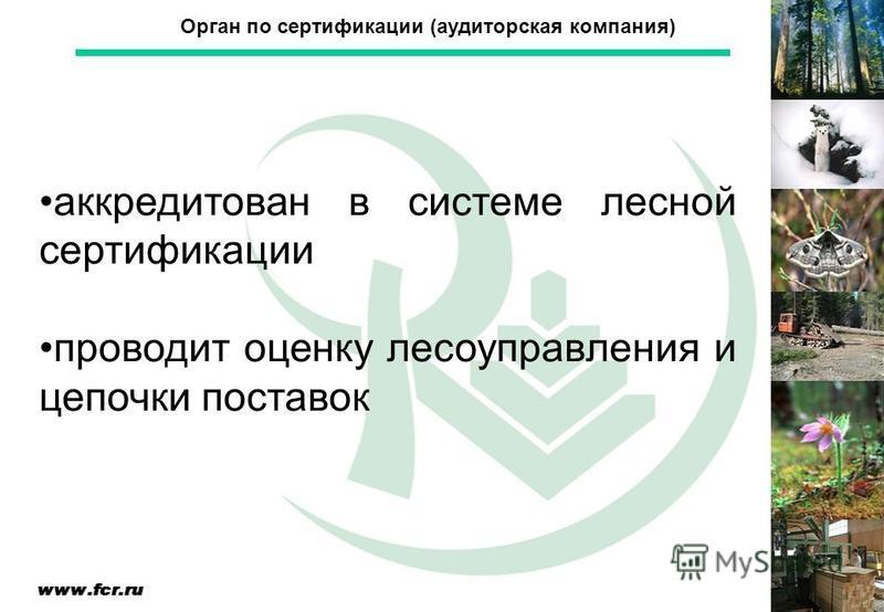 аккредитован в системе лесной сертификации проводит оценку лесоуправления и цепочки поставок Орган по сертификации (аудиторская компания)