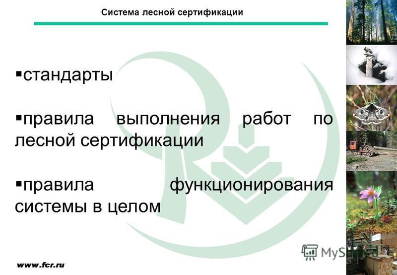 стандарты правила выполнения работ по лесной сертификации правила функционирования системы в целом Система лесной сертификации