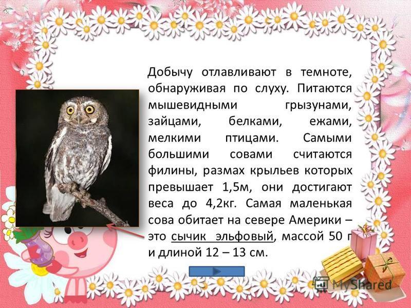 Добычу отлавливают в темноте, обнаруживая по слуху. Питаются мышевидными грызунами, зайцами, белками, ежами, мелкими птицами. Самыми большими совами считаются филины, размах крыльев которых превышает 1,5 м, они достигают веса до 4,2 кг. Самая маленьк