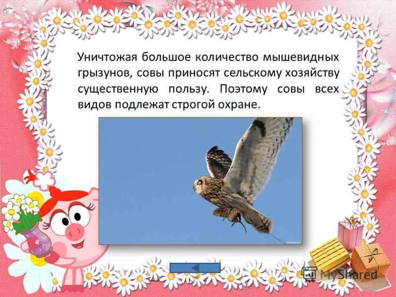 Уничтожая большое количество мышевидных грызунов, совы приносят сельскому хозяйству существенную пользу. Поэтому совы всех видов подлежат строгой охране.