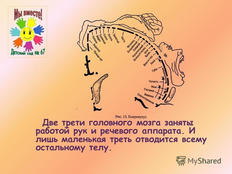 Две трети головного мозга заняты работой рук и речевого аппарата. И лишь маленькая треть отводится всему остальному телу.