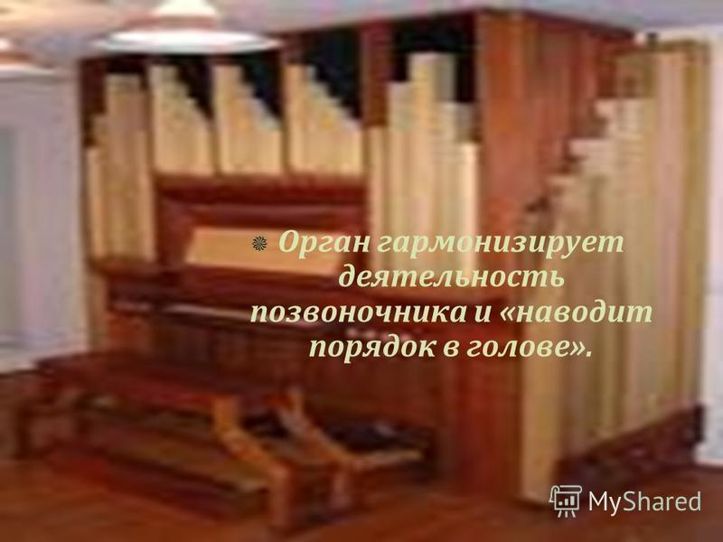 Орган гармонизирует деятельность позвоночника и «наводит порядок в голове».
