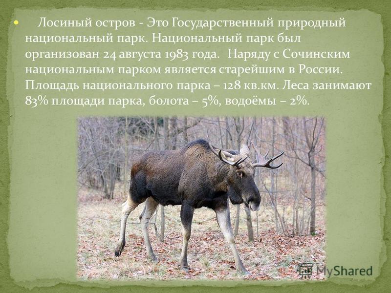 Лосиный остров - Это Государственный природный национальный парк. Национальный парк был организован 24 августа 1983 года. Наряду с Сочинским национальным парком является старейшим в России. Площадь национального парка – 128 кв.км. Леса занимают 83% п
