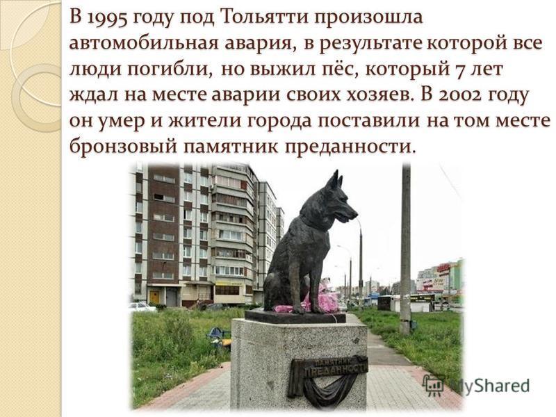 В 1995 году под Тольятти произошла автомобильная авария, в результате которой все люди погибли, но выжил пёс, который 7 лет ждал на месте аварии своих хозяев. В 2002 году он умер и жители города поставили на том месте бронзовый памятник преданности.