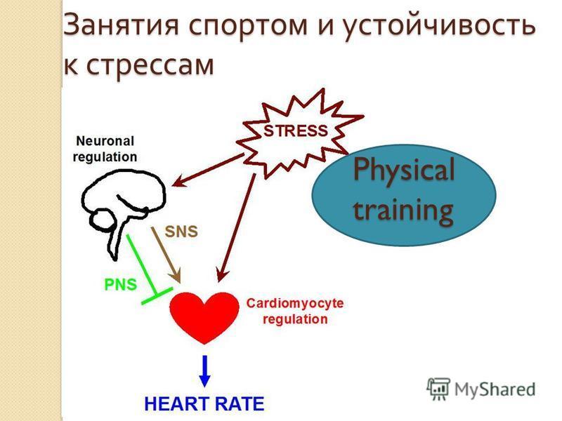 Physical training Занятия спортом и устойчивость к стрессам