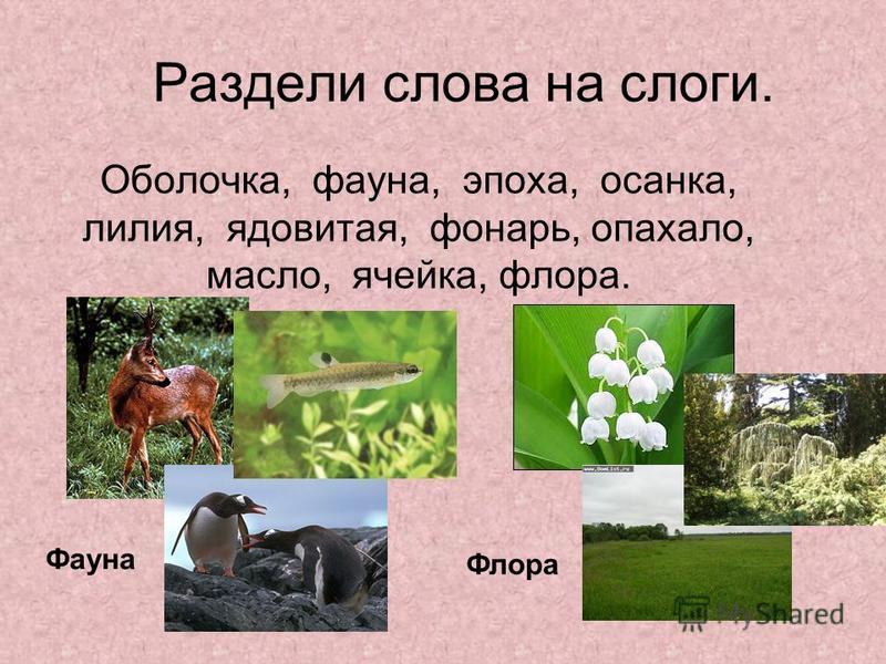 Раздели слова на слоги. Оболочка, фауна, эпоха, осанка, лилия, ядовитая, фонарь, опахало, масло, ячейка, флора. Фауна Флора