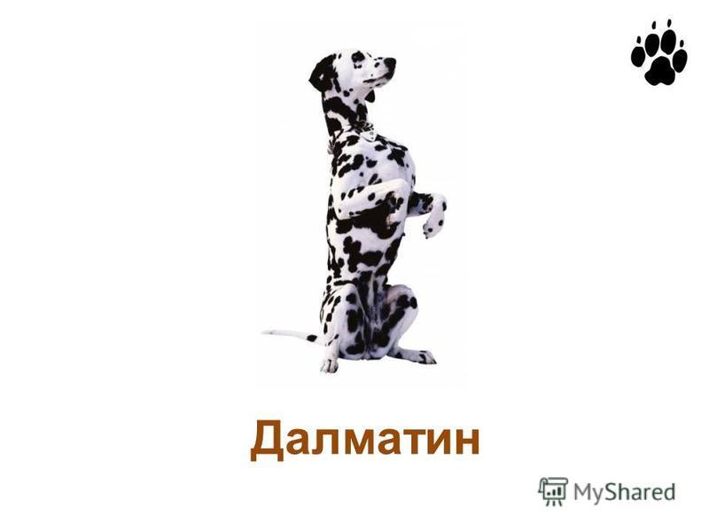 Далматин