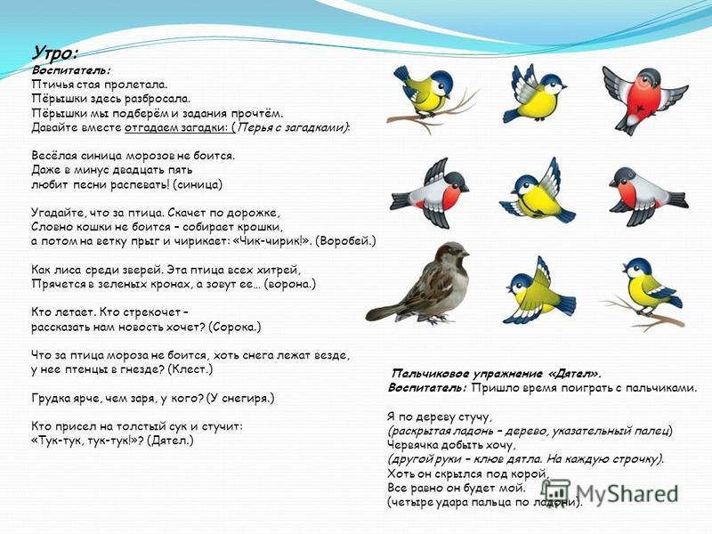 Утро: Воспитатель: Птичья стая пролетала. Пёрышки здесь разбросала. Пёрышки мы подберём и задания прочтём. Давайте вместе отгадаем загадки: (Перья с загадками): Весёлая синица морозов не боится. Даже в минус двадцать пять любит песни распевать! (сини
