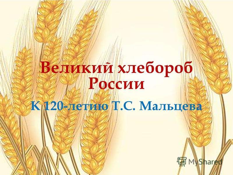 Великий хлебороб России К 120-летию Т.С. Мальцева