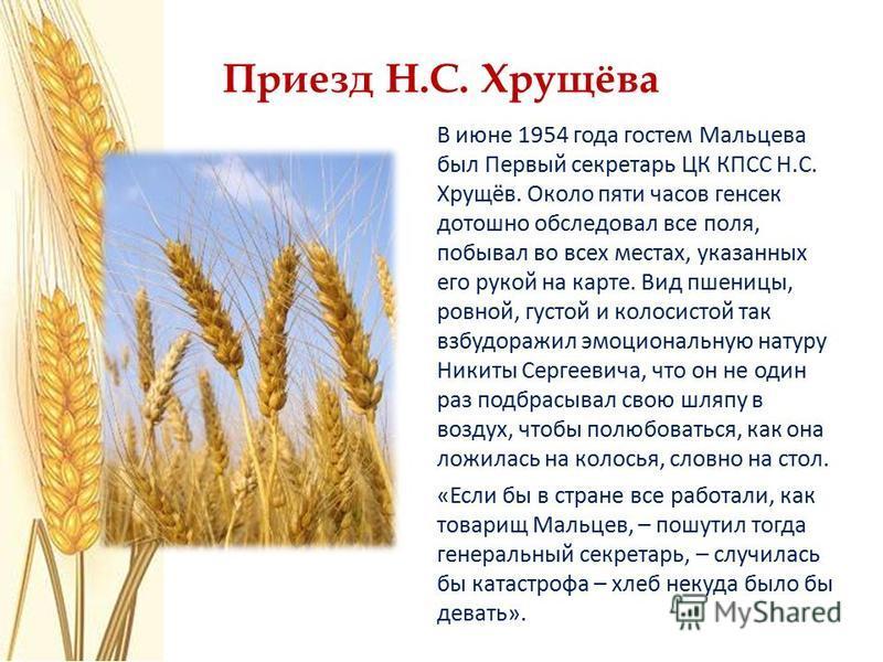Приезд Н.С. Хрущёва В июне 1954 года гостем Мальцева был Первый секретарь ЦК КПСС Н.С. Хрущёв. Около пяти часов генсек дотошно обследовал все поля, побывал во всех местах, указанных его рукой на карте. Вид пшеницы, ровной, густой и колосистой так взб