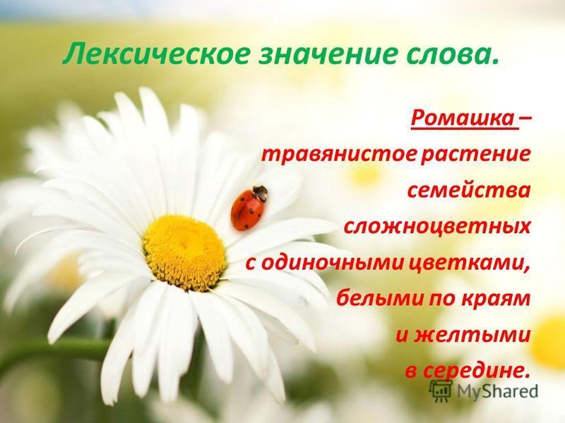 Лексическое значение слова. Ромашка – травянистое растение семейства сложноцветных с одиночными цветками, белыми по краям и желтыми в середине.