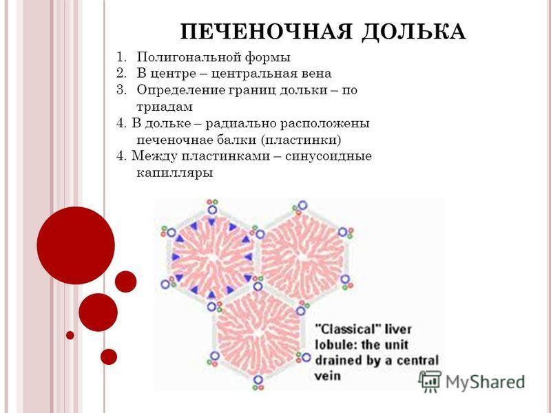 ПЕЧЕНОЧНАЯ ДОЛЬКА 1. Полигональной формы 2. В центре – центральная вена 3. Определение границ дольки – по триадам 4. В дольке – радиально расположены печеночная балки (пластинки) 4. Между пластинками – синусоидные капилляры