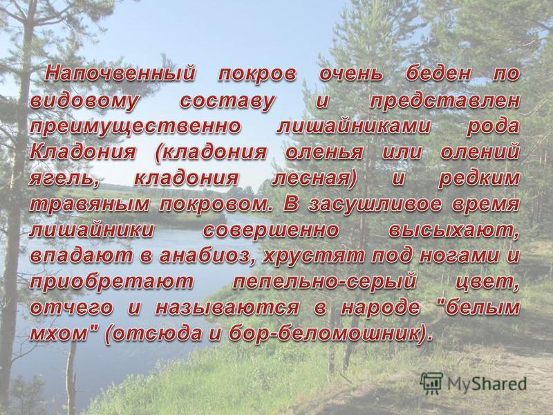 Кладония оленья Вериск обыкновенный Кладония бесформенная Толокнянка (медвежье ушко ) Исландский мох Кладония приальпийская