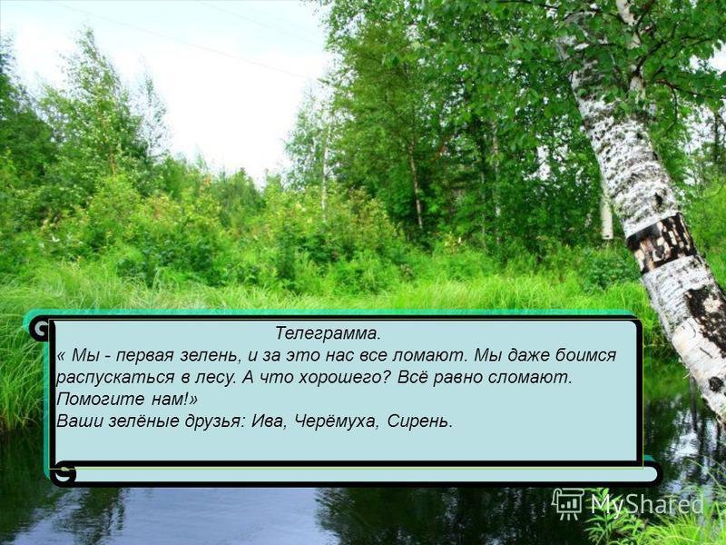Телеграмма. « Мы - первая зелень, и за это нас все ломают. Мы даже боимся распускаться в лесу. А что хорошего? Всё равно сломают. Помогите нам!» Ваши зелёные друзья: Ива, Черёмуха, Сирень.