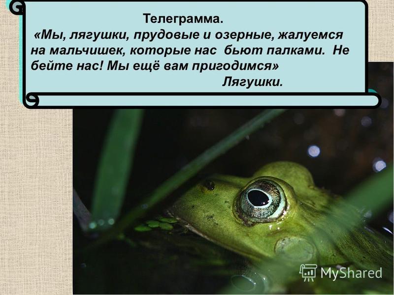 Телеграмма. «Мы, лягушки, прудовые и озерные, жалуемся на мальчишек, которые нас бьют палками. Не бейте нас! Мы ещё вам пригодимся» Лягушки.