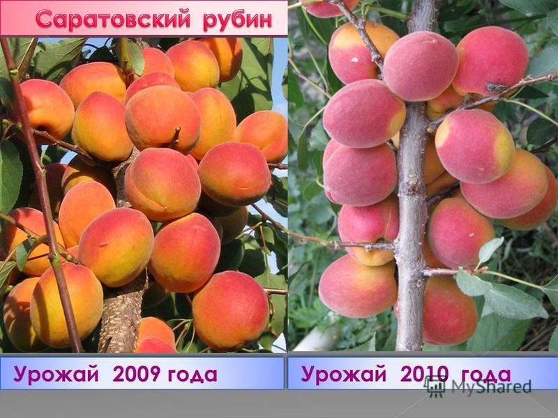 Урожай 2009 года Урожай 2010 года
