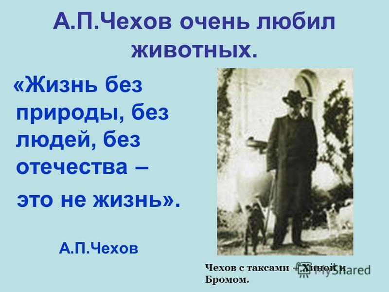 А.П.Чехов очень любил животных. «Жизнь без природы, без людей, без отечества – это не жизнь». А.П.Чехов Чехов с таксами – Хиной и Бромом.