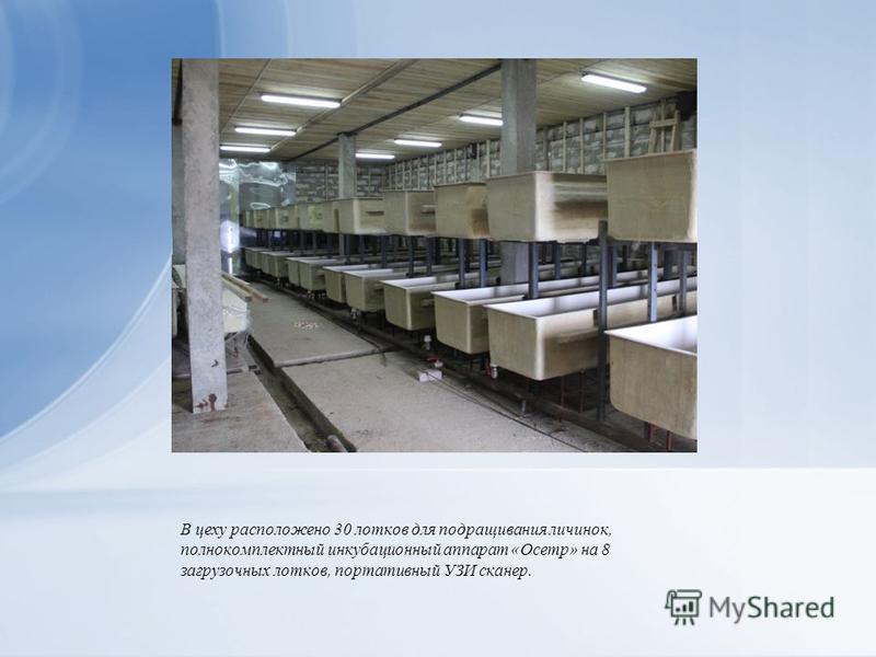 В цеху расположено 30 лотков для подращивания личинок, полнокомплектный инкубационный аппарат «Осетр» на 8 загрузочных лотков, портативный УЗИ сканер.