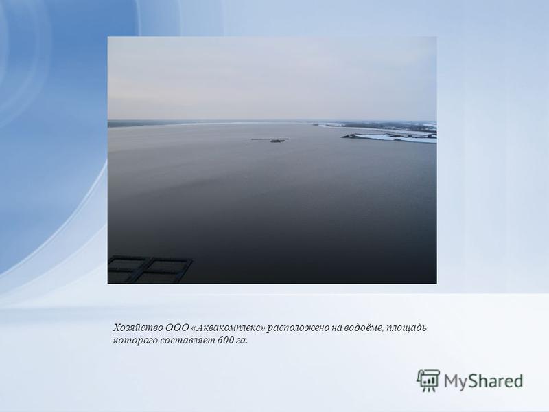 Хозяйство ООО «Аквакомплекс» расположено на водоёме, площадь которого составляет 600 га.