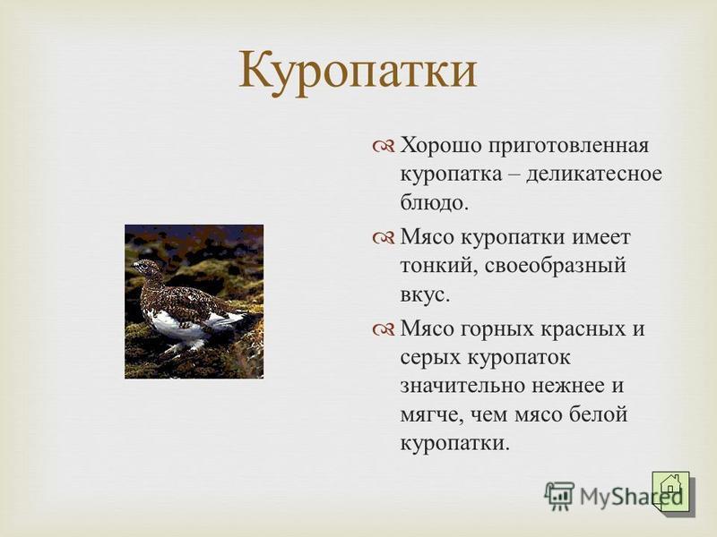 Куропатки Хорошо приготовленная куропатка – деликатесное блюдо. Мясо куропатки имеет тонкий, своеобразный вкус. Мясо горных красных и серых куропаток значительно нежнее и мягче, чем мясо белой куропатки.