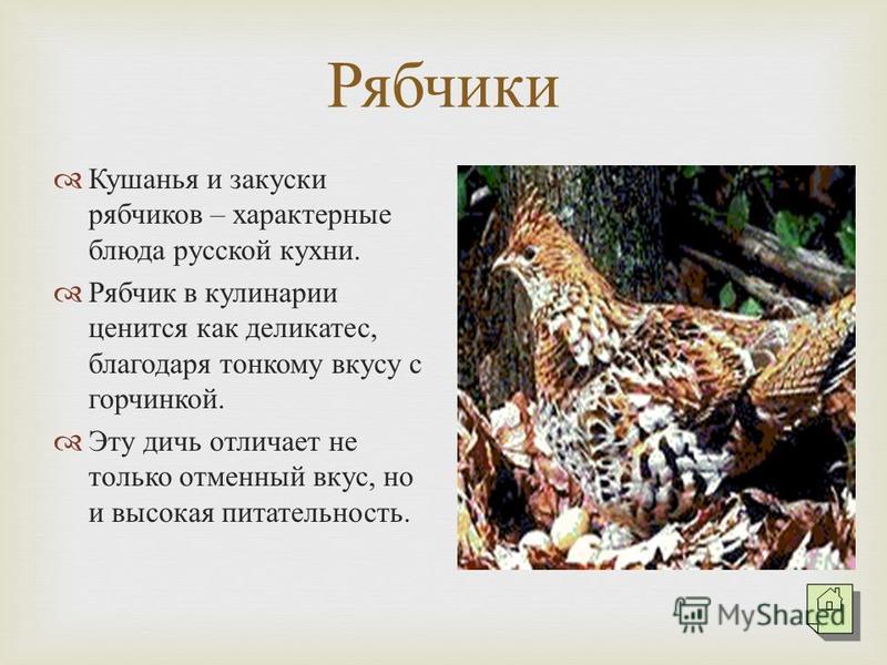 Рябчики Кушанья и закуски рябчиков – характерные блюда русской кухни. Рябчик в кулинарии ценится как деликатес, благодаря тонкому вкусу с горчинкой. Эту дичь отличает не только отменный вкус, но и высокая питательность.