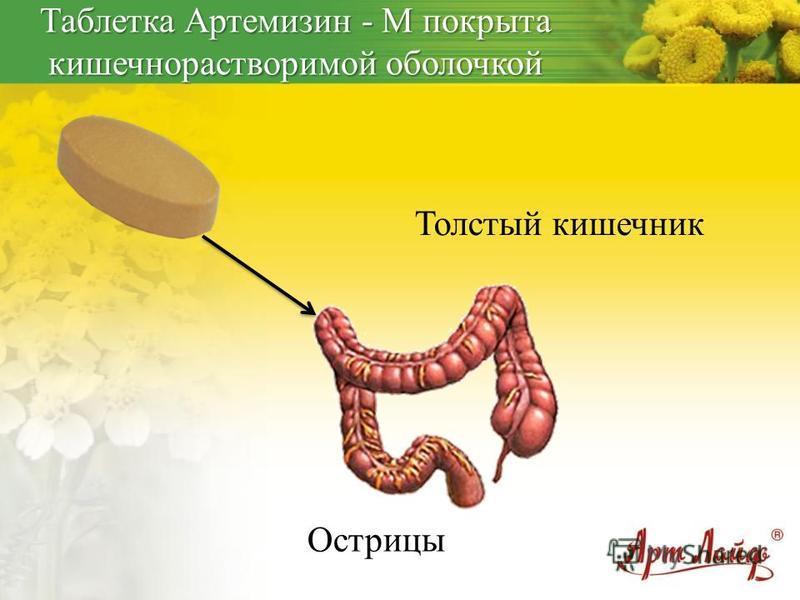Толстый кишечник Острицы