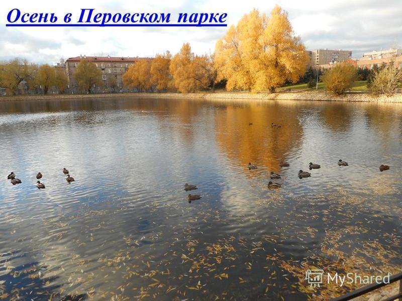 Осень в Перовском парке