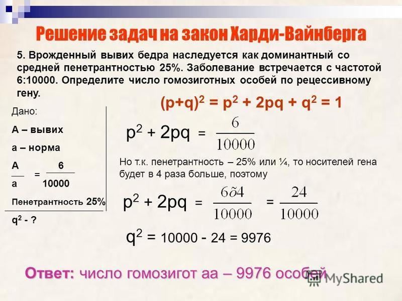 Решение задач на закон Харди-Вайнберга 5. Врожденный вывих бедра наследуется как доминантный со средней пенетрантностью 25%. Заболевание встречается с частотой 6:10000. Определите число гомозиготных особей по рецессивному гену. (р+q) 2 = р 2 + 2 рq +