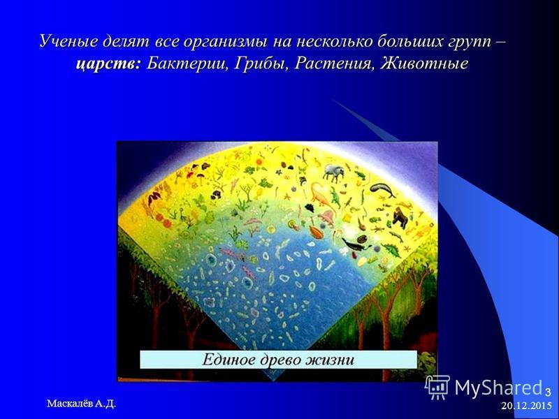 20.12.2015 Маскалёв А.Д. 3 Ученые делят все организмы на несколько больших групп – царств: Бактерии, Грибы, Растения, Животные