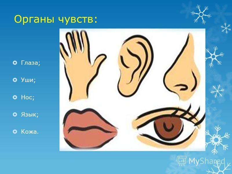 Органы чувств: Глаза; Уши; Нос; Язык; Кожа.