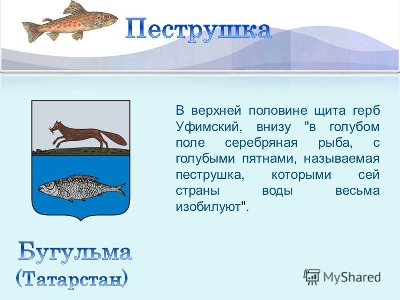 В верхней половине щита герб Уфимский, внизу в голубом поле серебряная рыба, с голубыми пятнами, называемая пеструшка, которыми сей страны воды весьма изобилуют.