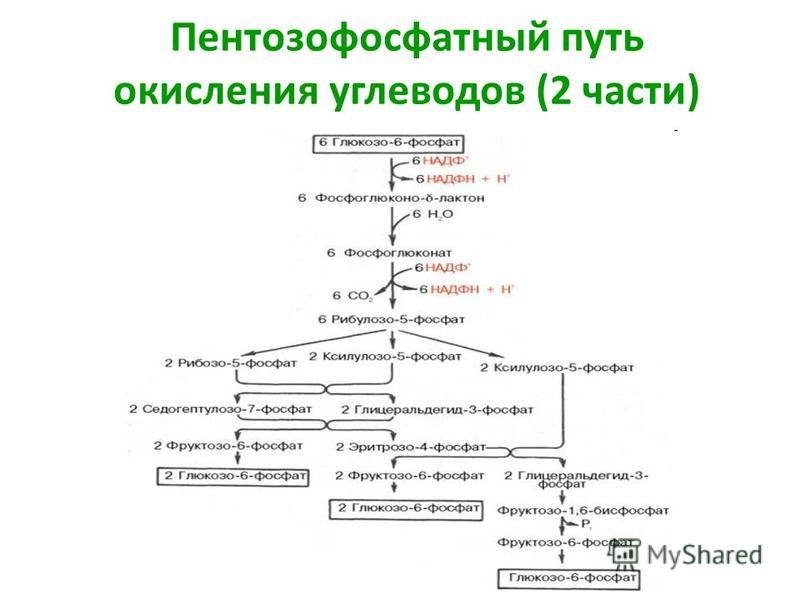 Пентозофосфатный путь окисления углеводов (2 части)