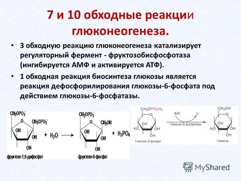 7 и 10 обходные реакции глюконеогенеза. 3 обходную реакцию глюконеогенеза катализирует регуляторный фермент - фруктозабисфосфотаза (ингибируется АМФ и активируется АТФ). 1 обходная реакция биосинтеза глюкозы является реакция дефосфорилирования глюкоз