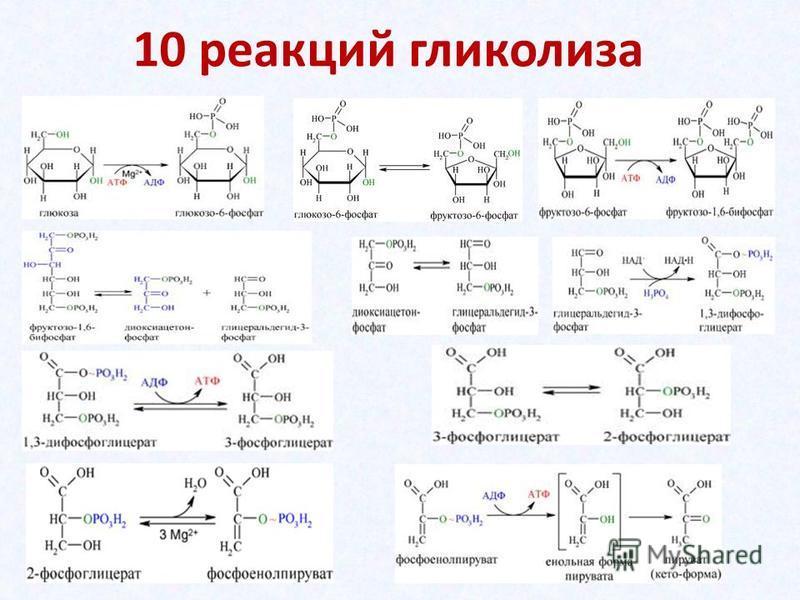10 реакций гликолиза