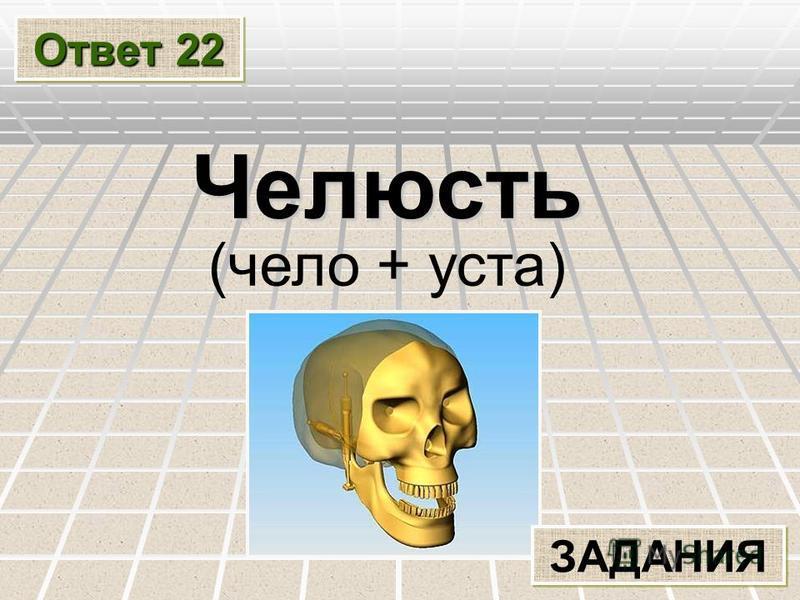 Ответ 22 ЗАДАНИЯ Челюсть (чело + уста)