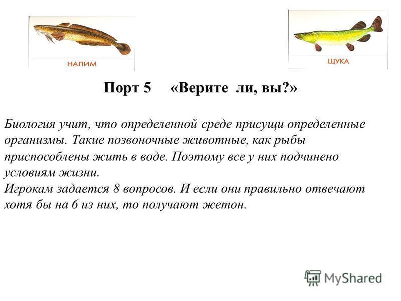 Порт 5 «Верите ли, вы?» Биология учит, что определенной среде присущи определенные организмы. Такие позвоночные животные, как рыбы приспособлены жить в воде. Поэтому все у них подчинено условиям жизни. Игрокам задается 8 вопросов. И если они правильн