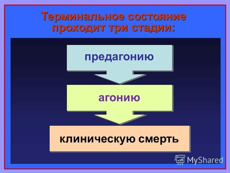 Терминальное состояние проходит три стадии: предагонию агонию клиническую смерть