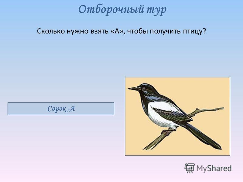Отборочный тур Сколько нужно взять «А», чтобы получить птицу? Сорок -А