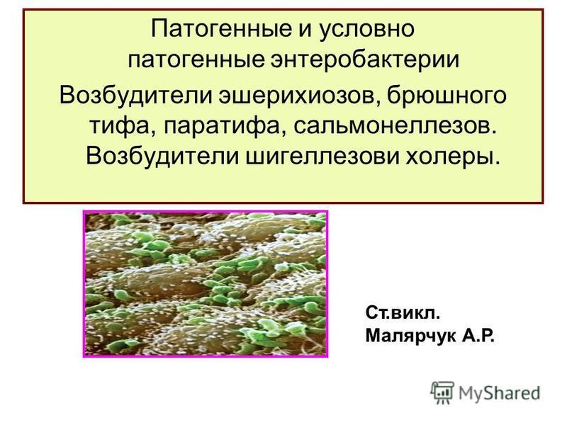 Патогенные и условно патогенные энтеробактерии Возбудители эшерихиозов, брюшного тифа, паратифа, сальмонеллезов. Возбудители шигеллезов холеры. Ст.выкл. Малярчук А.Р.