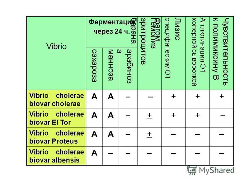 Vibrio Ферментация через 24 ч. Гемолизэритроцитовбарана Лизисспецифическим О1 фагом Агглютинация О1 холерной сывороткой Чувствительностьк полимиксину В сахарозаманнозаарабиноза Vibrio cholerae biovar cholerae AA– –+++ Vibrio cholerae biovar El Tor AA