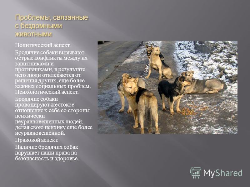 Проблемы, связанные с бездомными животными Политический аспект. Бродячие собаки вызывают острые конфликты между их защитниками и противниками, в результате чего люди отвлекаются от решения других, еще более важных социальных проблем. Психологический
