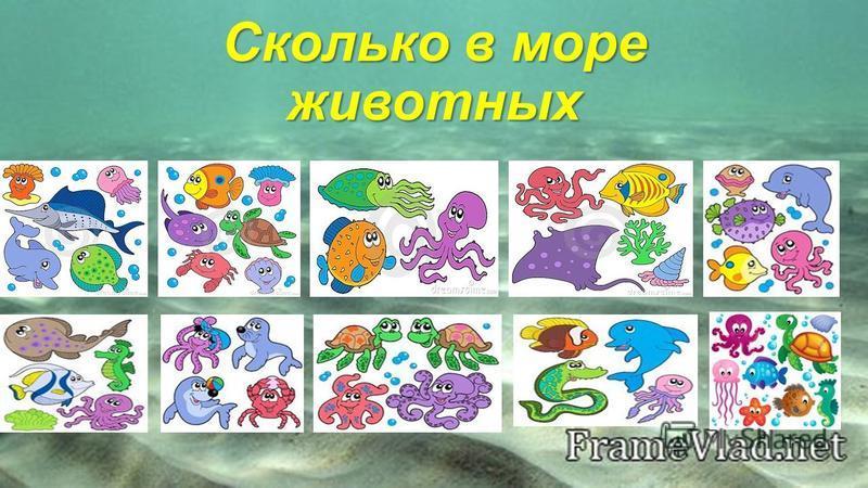 Сколько в море животных