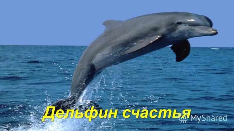 Дельфин счастья