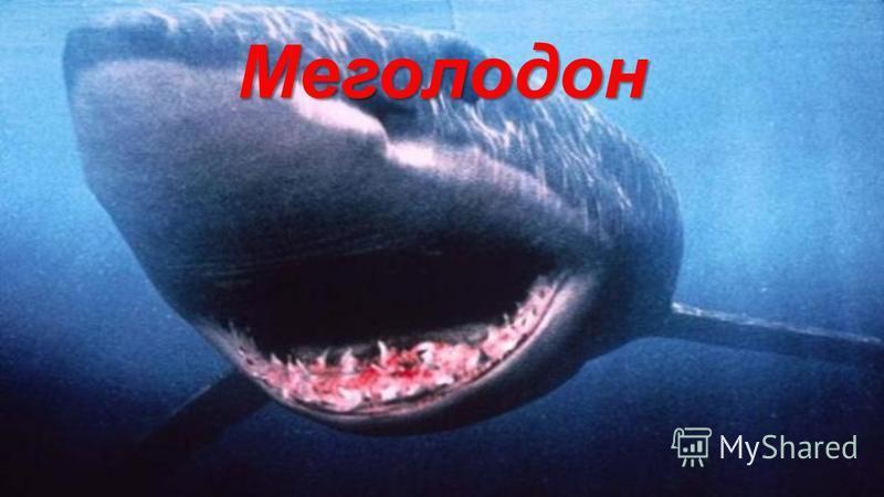 Меголодон